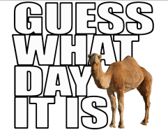 guess_what_day_it_is_hump_day_camel_postcard-rd8af66f83193452891224ddc69ca3685_vgbaq_8byvr_1024-1